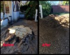 Richmond Stump Removal Contractor
