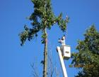 Tree Removal Contractor