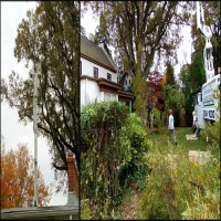 Richmond Tree Removal Contractor