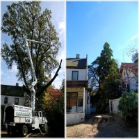 Richmond Tree Removal Contractor