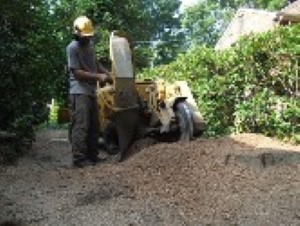 Richmond Stump Grinding & Removal