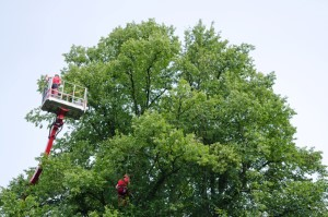 Richmond Tree Trimming