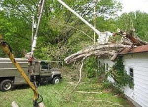 Highland-Springs-Tree-Removal