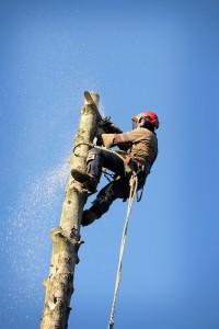 Beaverdamn Tree Removal Company