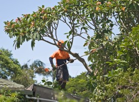 Bellwood Tree Removal Company