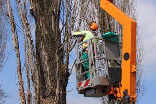 Charles City Tree Removal Company
