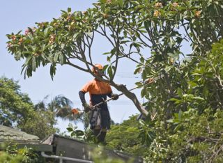 Chester Tree Removal Company