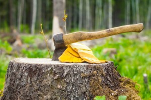 Chesterfield Tree Removal Company
