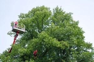 Old Church Tree Care Company
