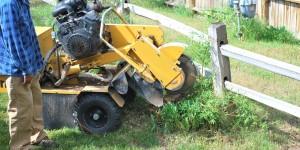 Highland Springs Tree Removal Company