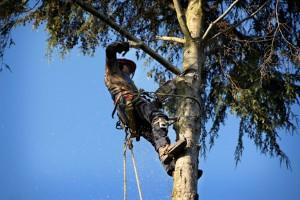 Quinton Tree Removal Company