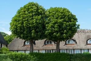 Toano Tree Removal Company