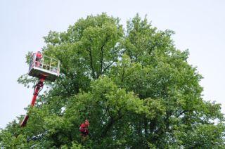 Manakin Sabot Tree Removal Company