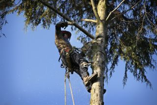 Montpelier Tree Removal Company