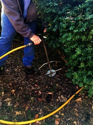 Richmond Pesticide Spraying/Deep Root Fertilization