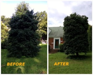 3 Benefits Of Tree Pruning In The Summer